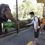 Me feeding an Asian Elephant