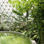 Tropical dome at Brisbane botanical gardens