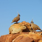 Birds on Kings Canyon