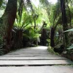 Maits Rest walkway