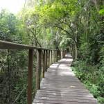 Boardwalks along the Half Collared Kingfisher trail