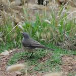 A bird in Knysna