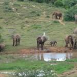 An elephant washing himself