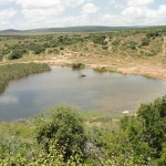 A watering hole in Addo