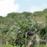 Vegetation in Addo