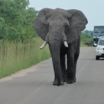 Elephant following us down the road