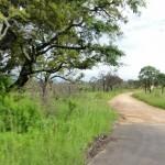 Driving through Kruger