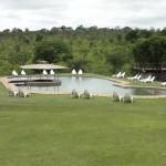 Swimming pool at Nkambeni camp