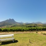 View from the Warwick estate tasting