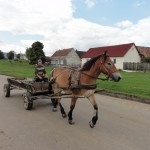 Horse and cart passing through the village
